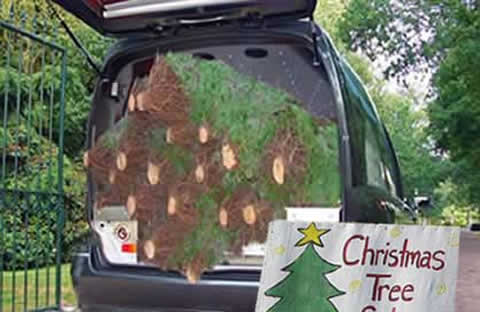 Christmas trees for sale from hearse